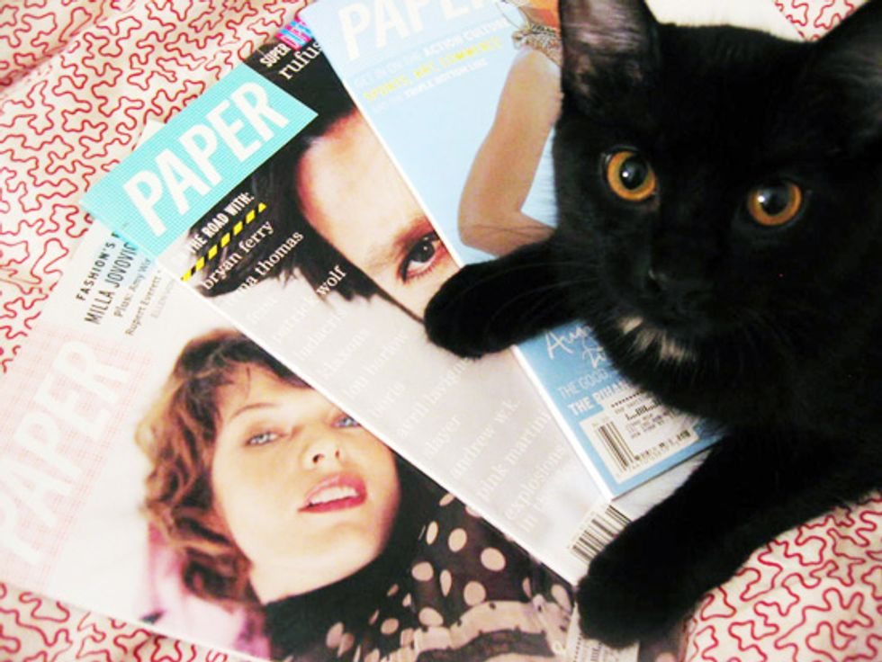 Pets on PAPER: Meet Ham