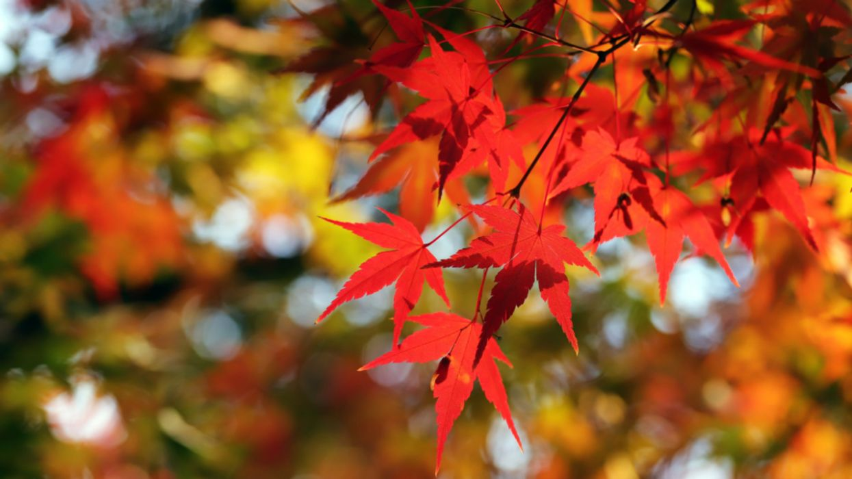 Climate Change Is Making Fall Leaves Change Color Sooner