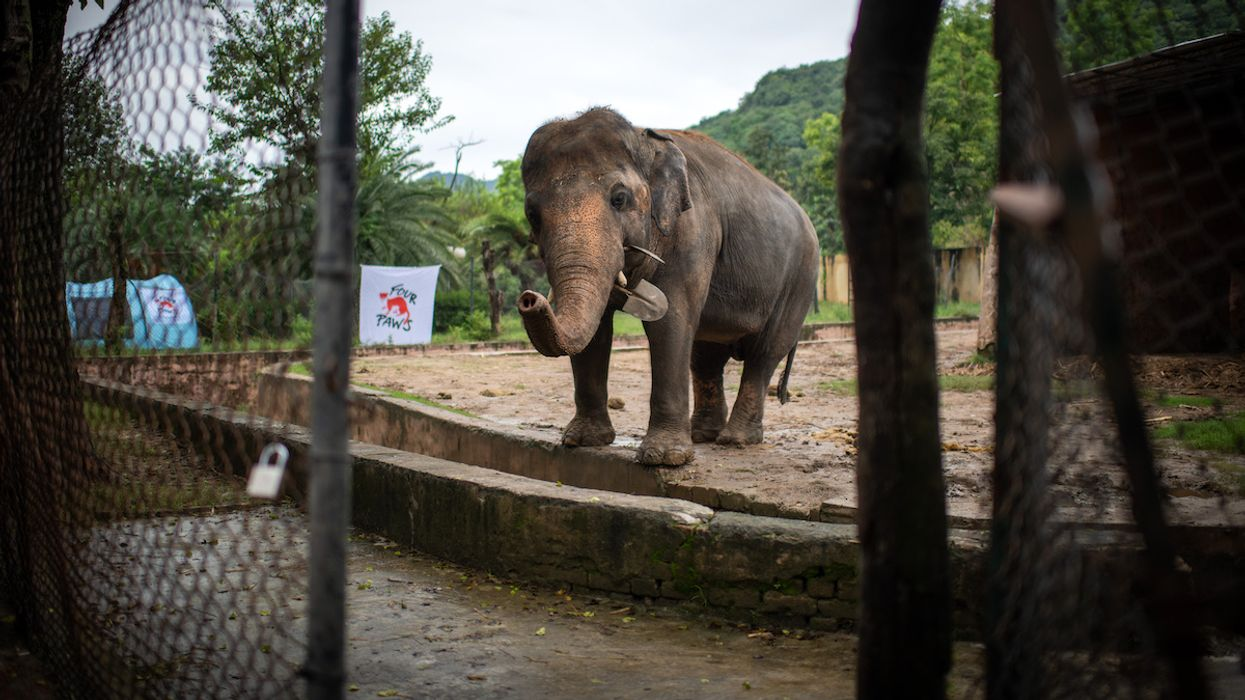 'World's Loneliest Elephant' Rescued From Cruel Conditions With Help From Cher