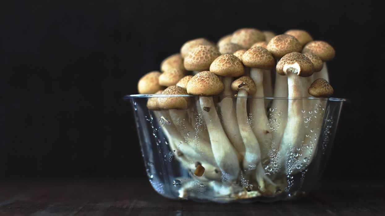 A mycological trip with mushrooms.