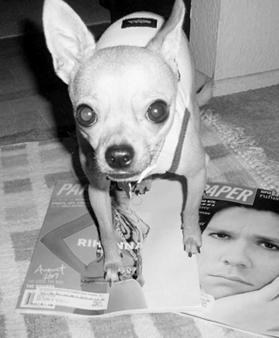Pets on PAPER: Meet Maleko Kekoa Blanche