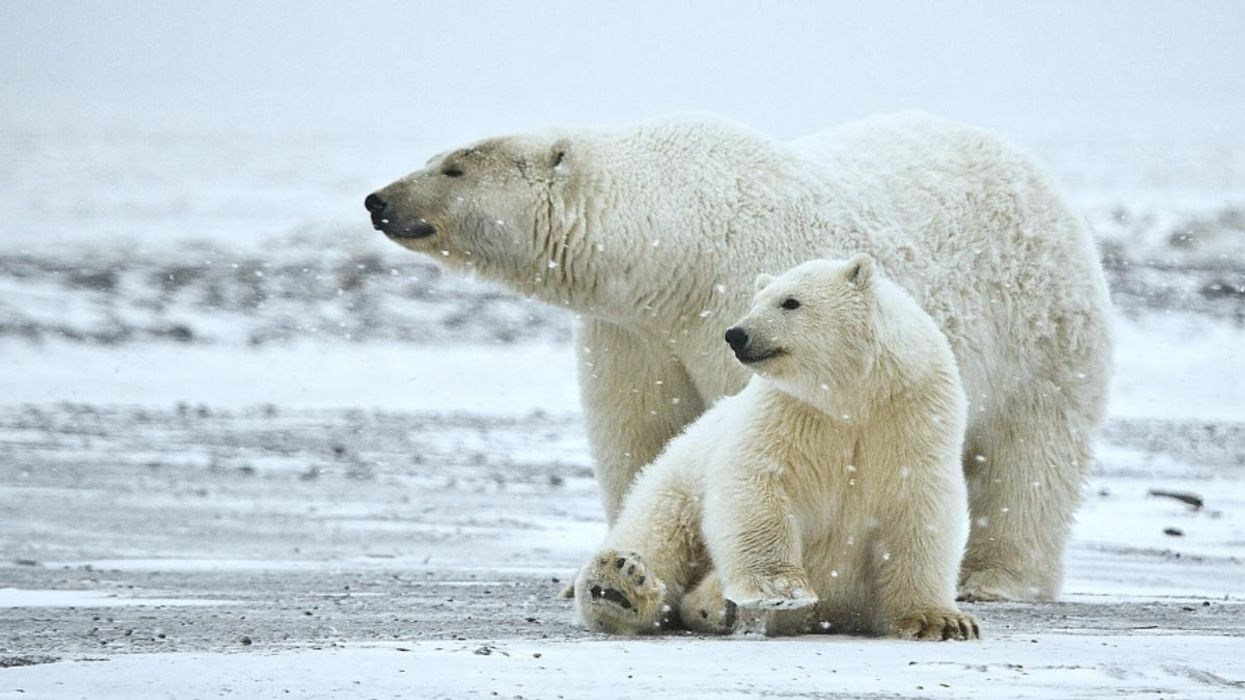 Bank of America Promises It Won't Fund Arctic Drilling