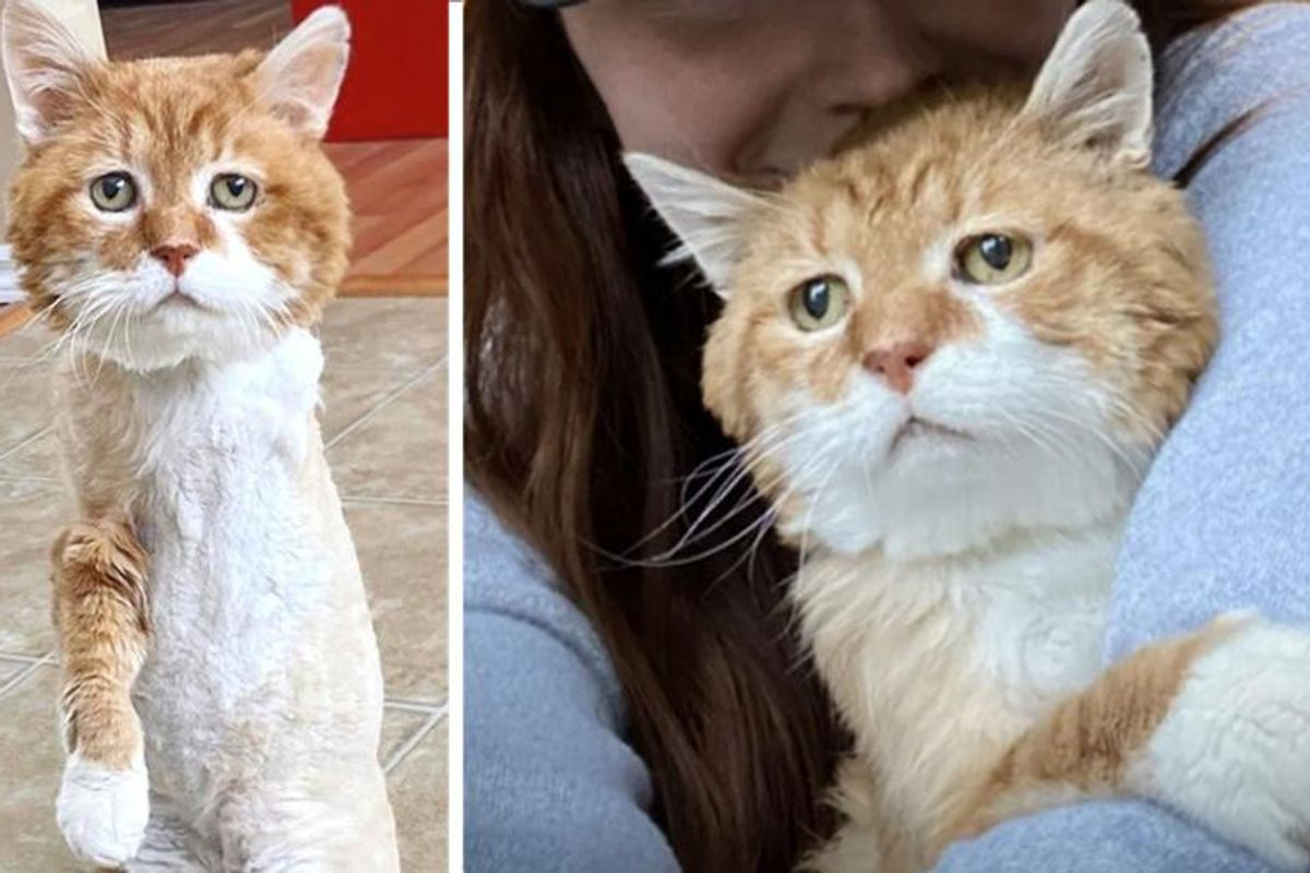 Cat with 3 Legs Went Back to House Where He Discovered Kindness, and Found Family of His Dreams