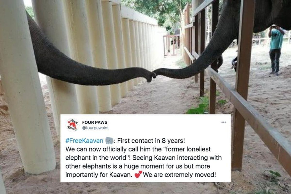 Kaavan, the 'World's loneliest elephant' just had his first contact with another elephant in 8 years