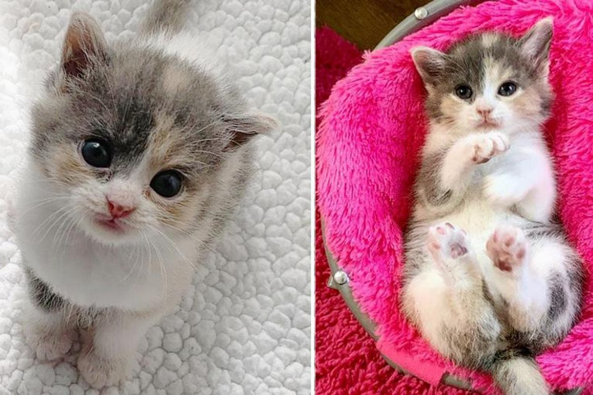 Kitten Found Alone in Yard, Kneads Her Way into Hearts of Family