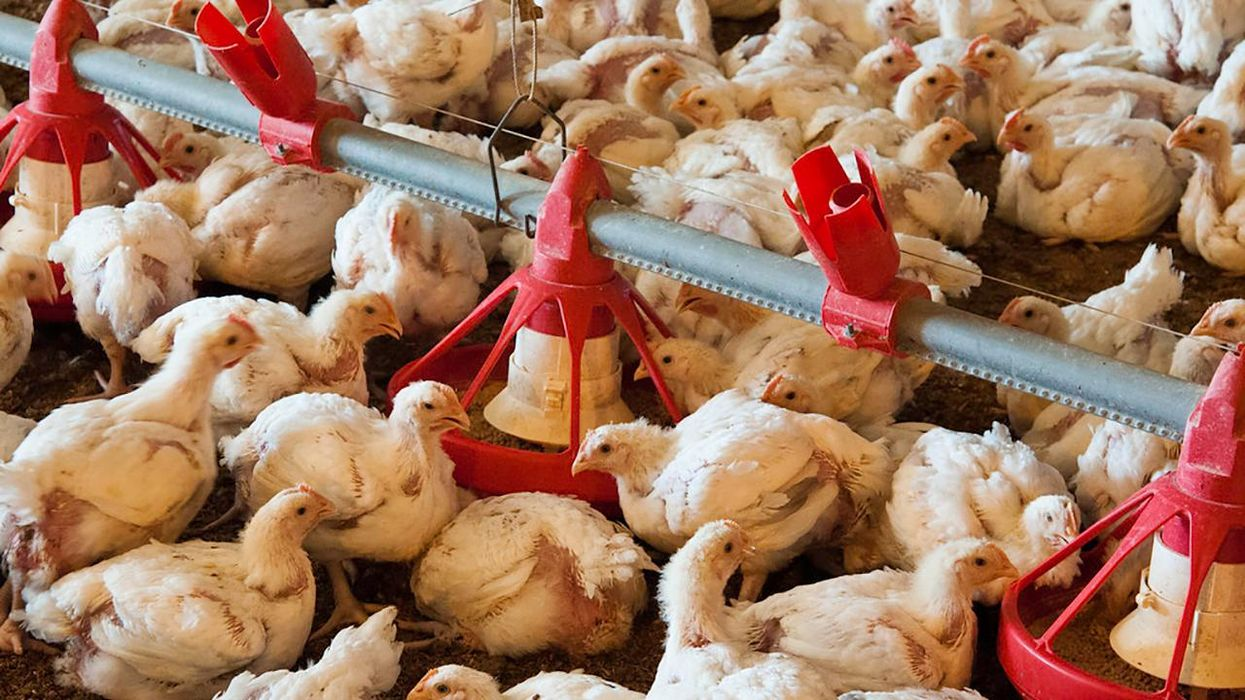 Tyson Exploits Consumers Just Like Its Animals and the Workers Who Raise Them