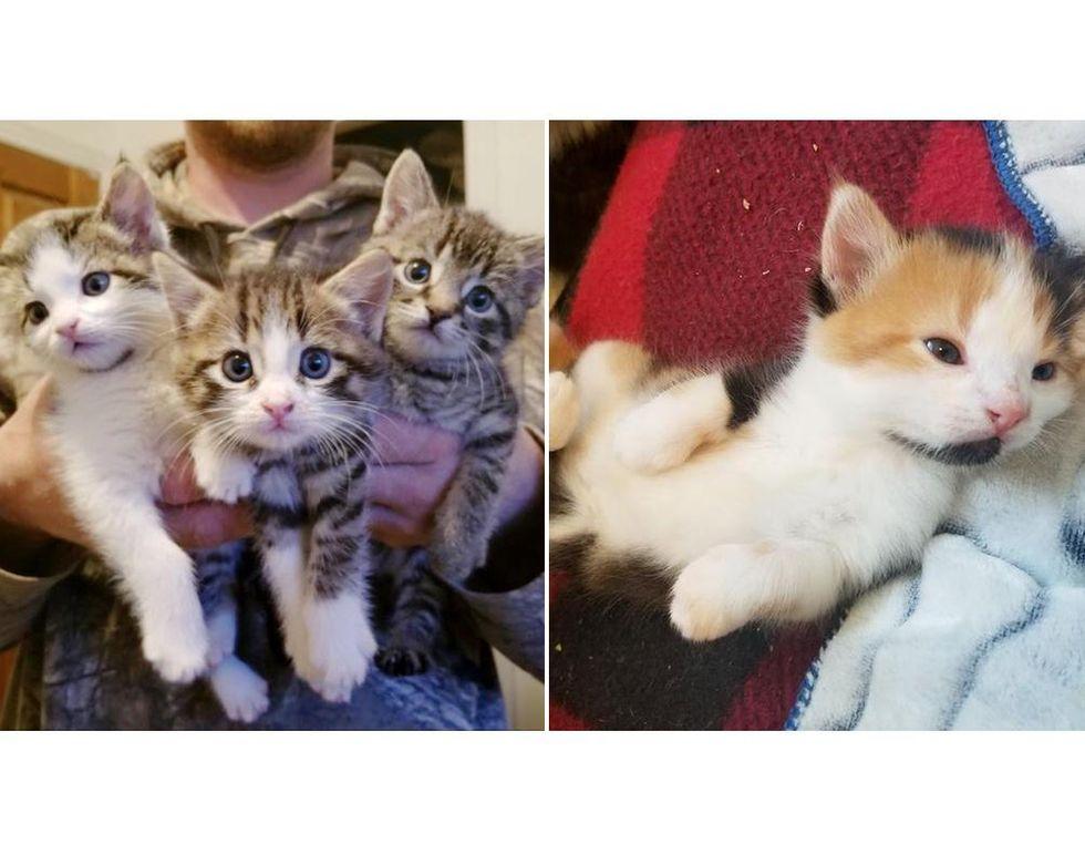 Una gata dejó a sus gatitos en el porche de la familia y volvió con 4 más dos meses después