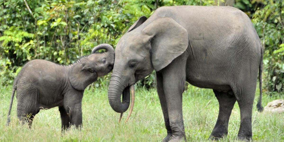 Want to Fight Climate Change? Start by Protecting These Endangered Species
