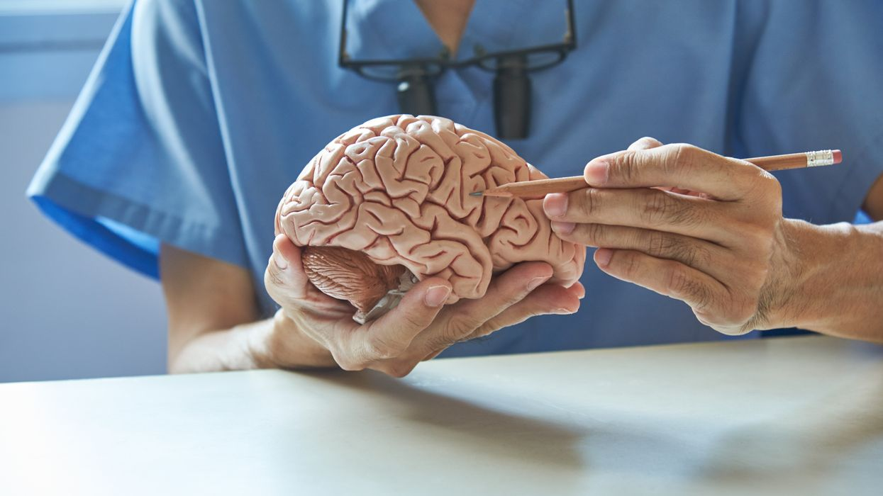 doctor points to brain section