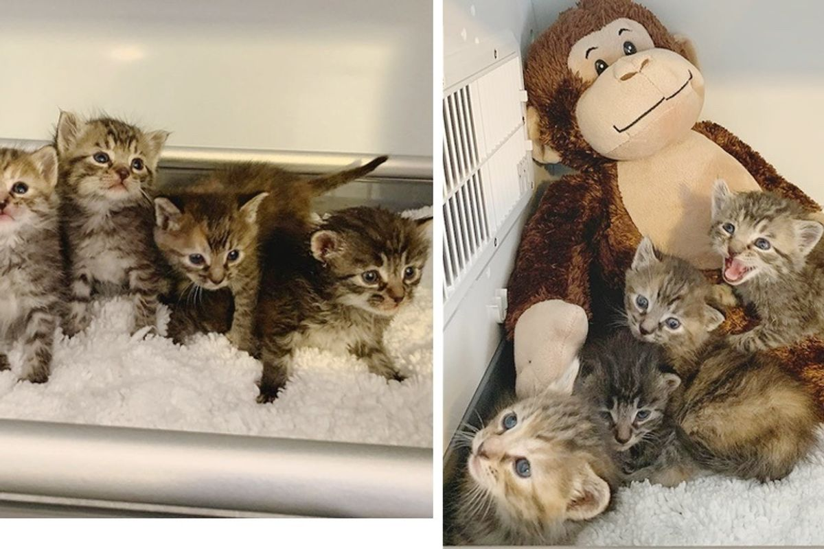 Kittens So Happy to Have a Warm Place and Sweet Companion After Being Found in Cold Shed