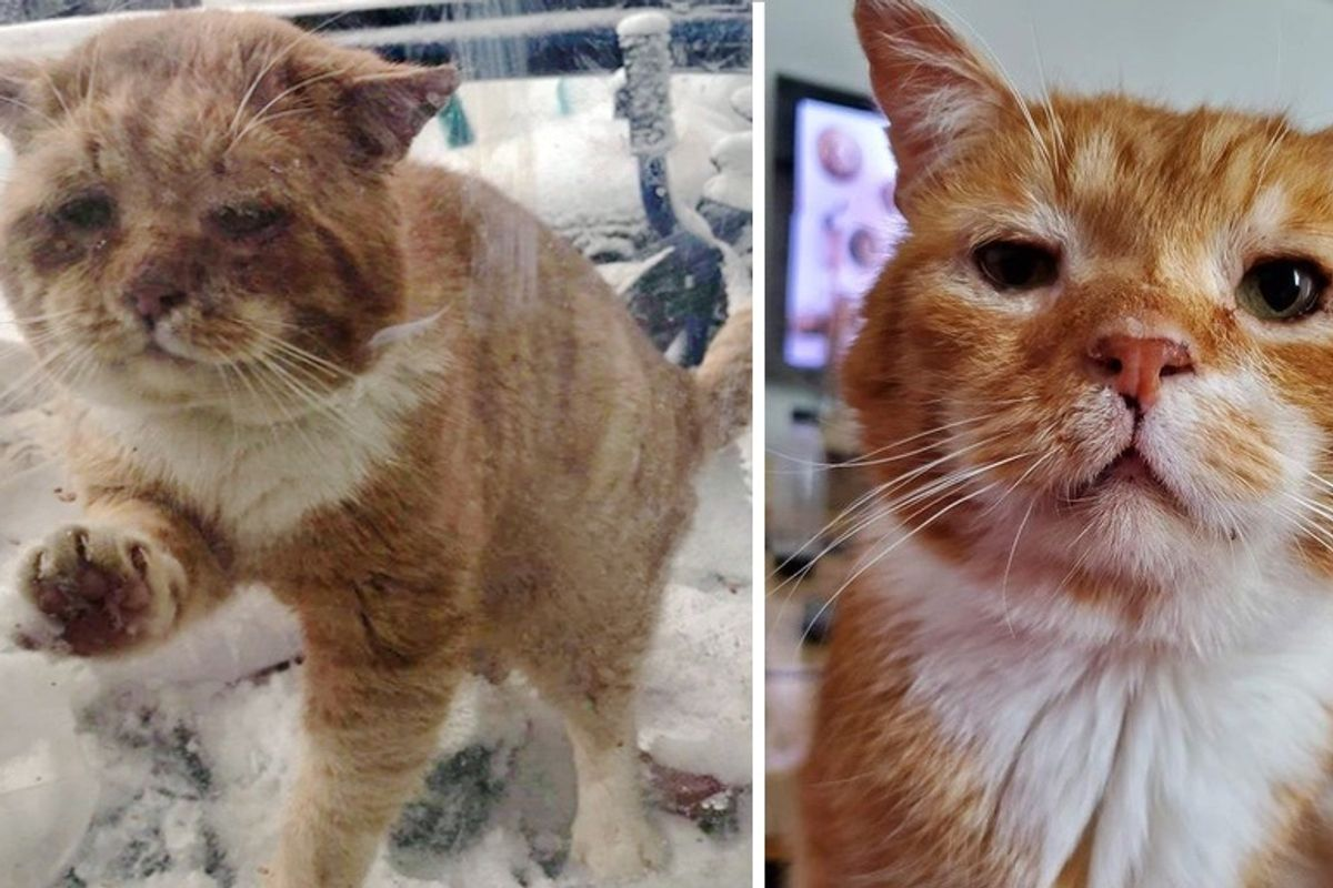 Cat Showed Up at Family's Door and Asked to Be Let Inside After Spending Years on the Streets