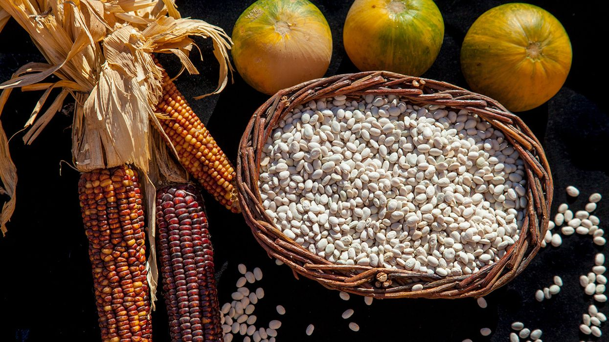 Returning the 'Three Sisters' – Corn, Beans and Squash – to Native American Farms Nourishes People, Land and Cultures