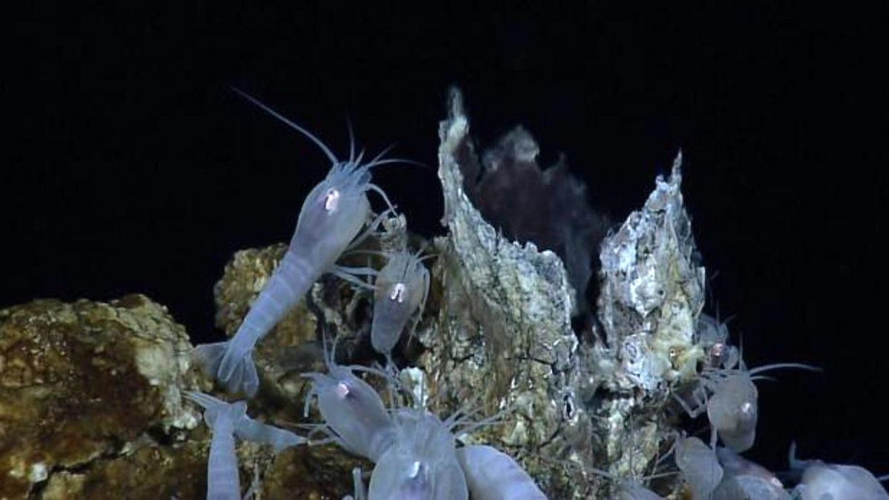 Global Treaty Needed to Halt Deep Sea Mining, Greenpeace Investigation Concludes