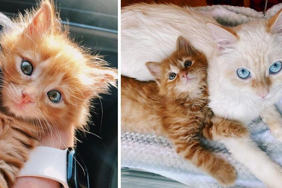 Kitten Befriends Family Cat and Determined to Win Her Over and Be Her Little Shadow