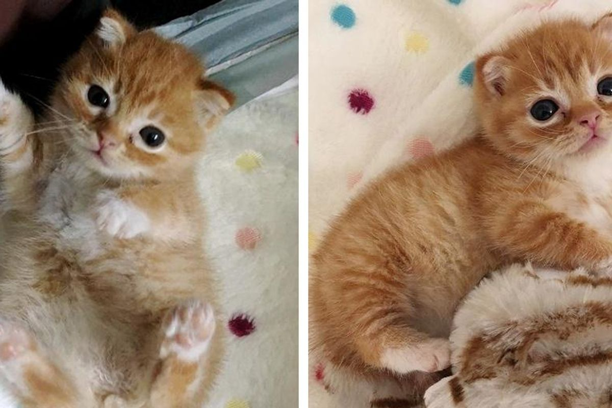 Kitten with Rare Condition and Small Stature Strives to Live Best Life, Now Blossoms into Happiest Cat