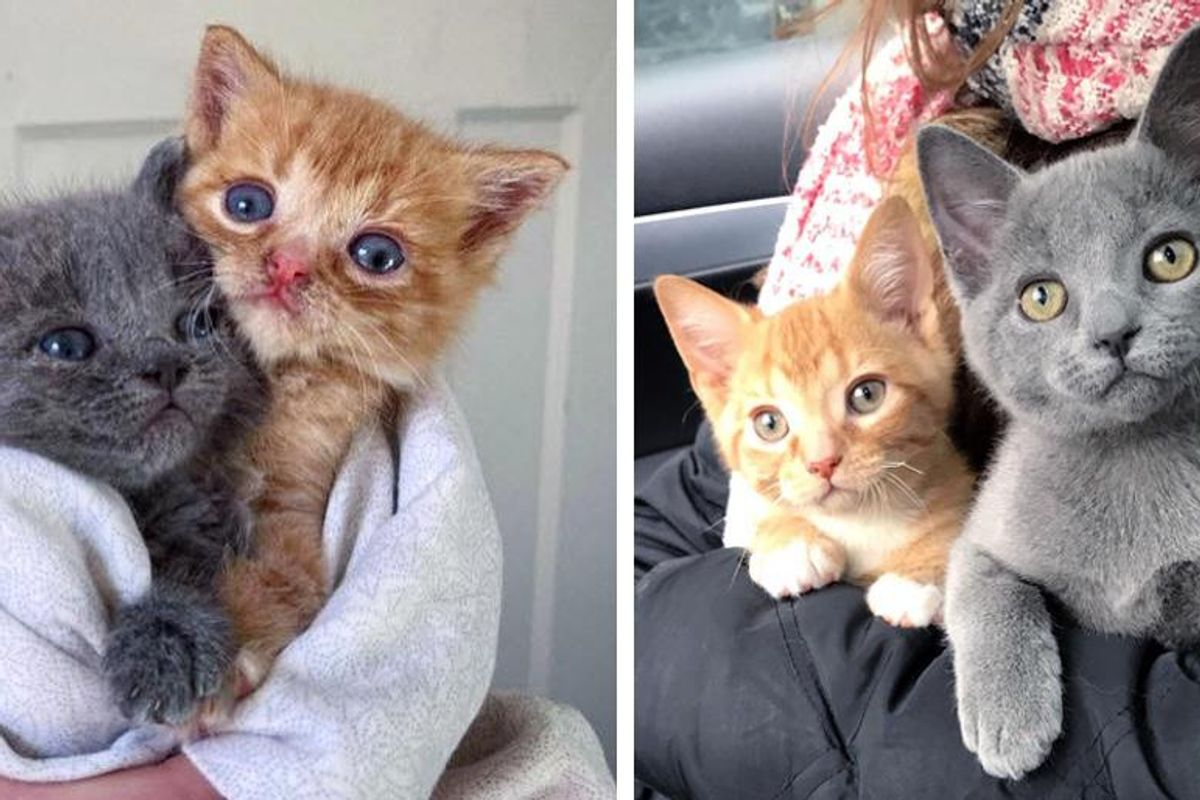 Kittens Left on Doorstep by Cat, Got Help Just in Time and Had Their Lives Turned Around