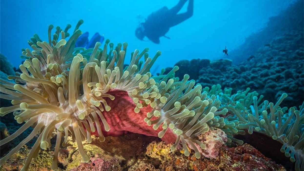 Coral Sanctuary Discovered off Kenyan and Tanzanian Coast