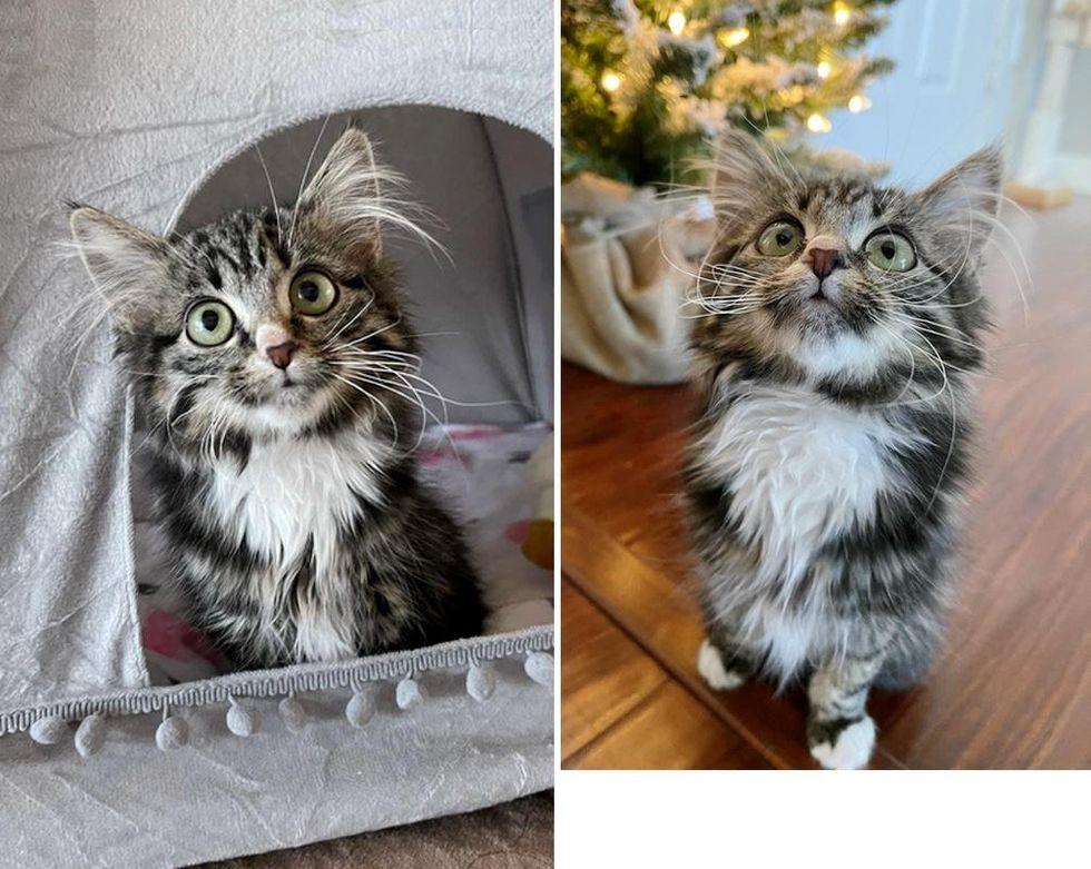 Gatita paralizada decidida a disfrutar de la vida como otros gatos, se abre camino en el corazón de todos