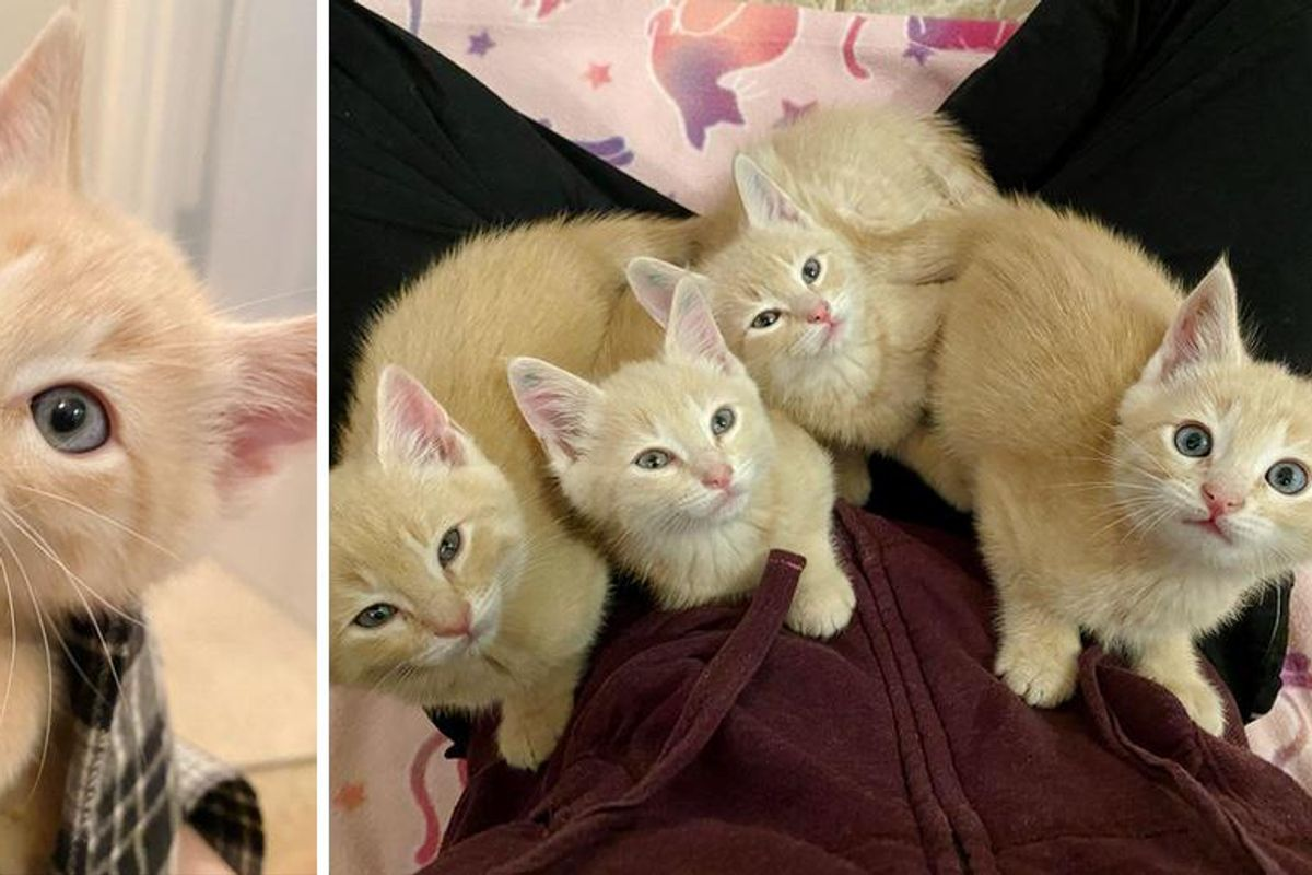 4 Orange Kittens Found Outside, Insist on Doing Everything Together and Won't Leave Each Other
