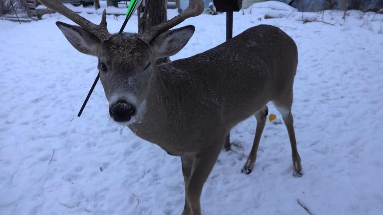 'Carrot the Magic Deer' Survives Arrow Shot Through Head
