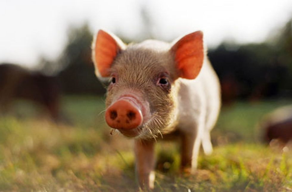 California's Proposition 2 Could Make Life Better for 20 Million Farm Animals