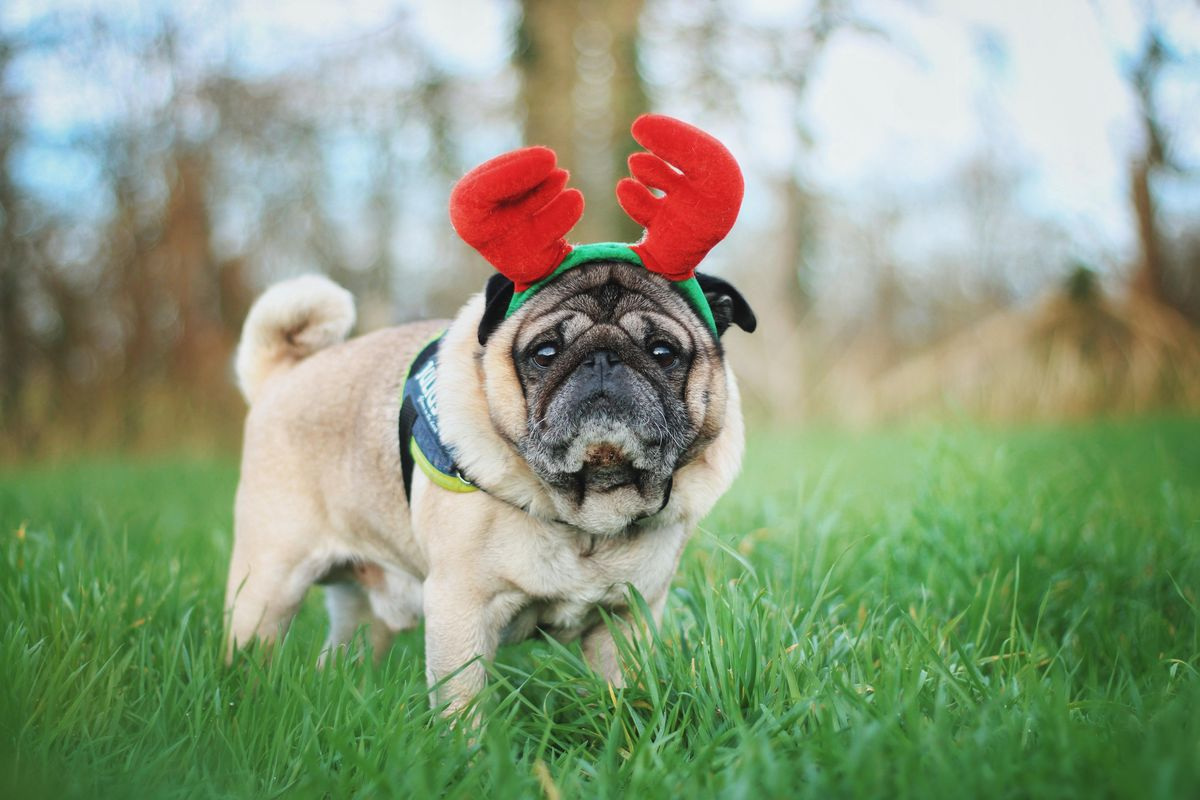 Last minute holiday gift ideas for your dog