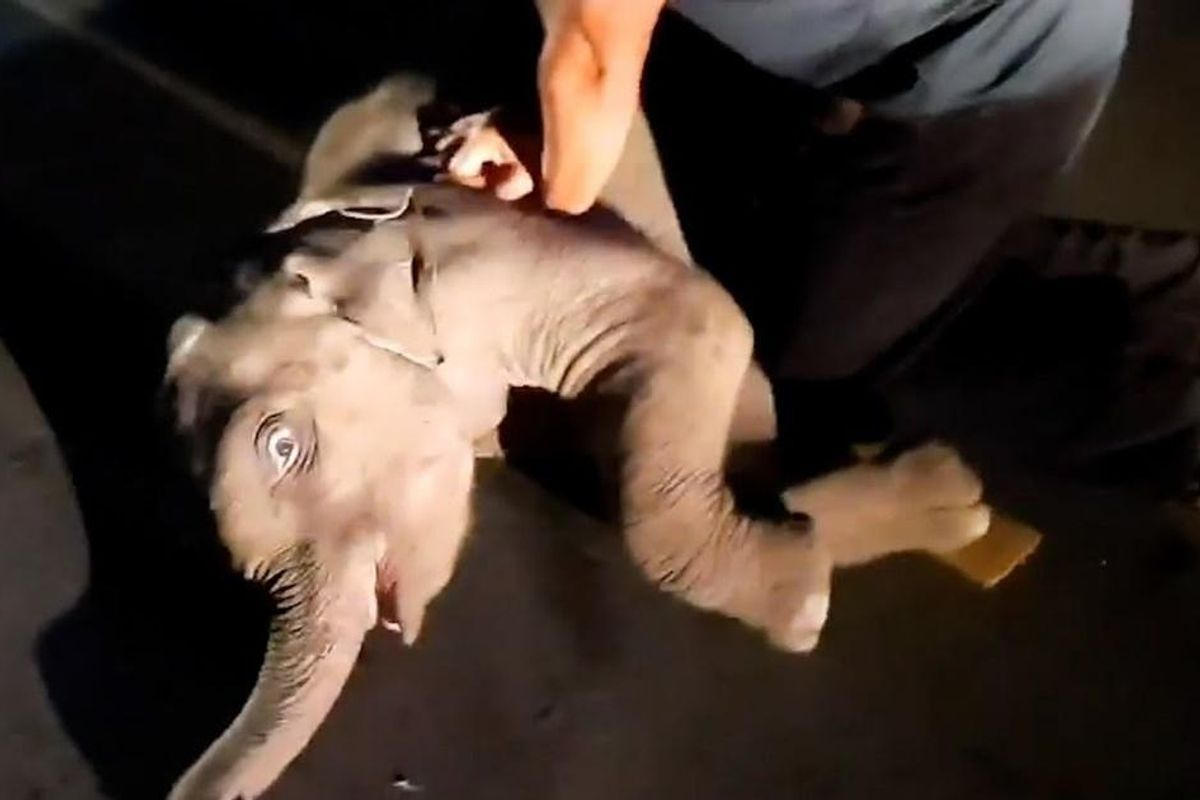 Rescue worker gives CPR to baby elephant in year's most unexpected act of pure heroism