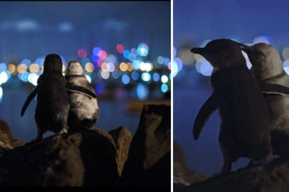 Two penguins who recently lost their partners seem to comfort one another in an iconic photo