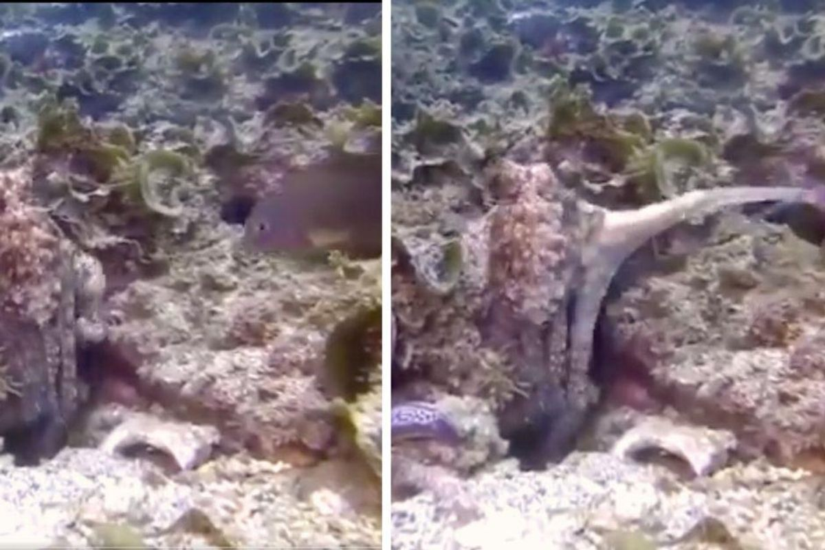 Octopuses sometimes punch the fish they go hunting with, just cuz they feel like it
