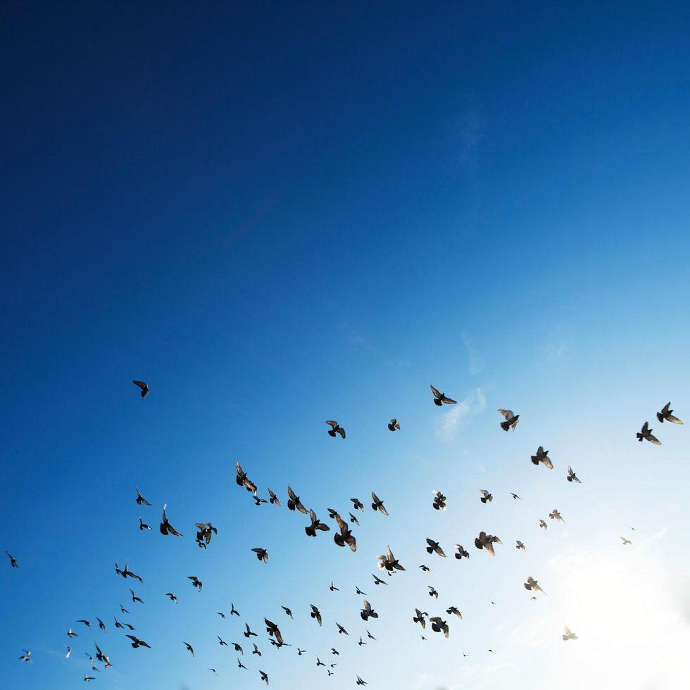 Nonfiction: Bird Attack!