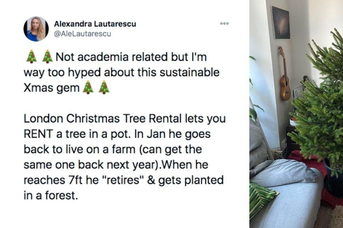 Christmas tree rental provides a solution to the real vs. artificial tree dilemma