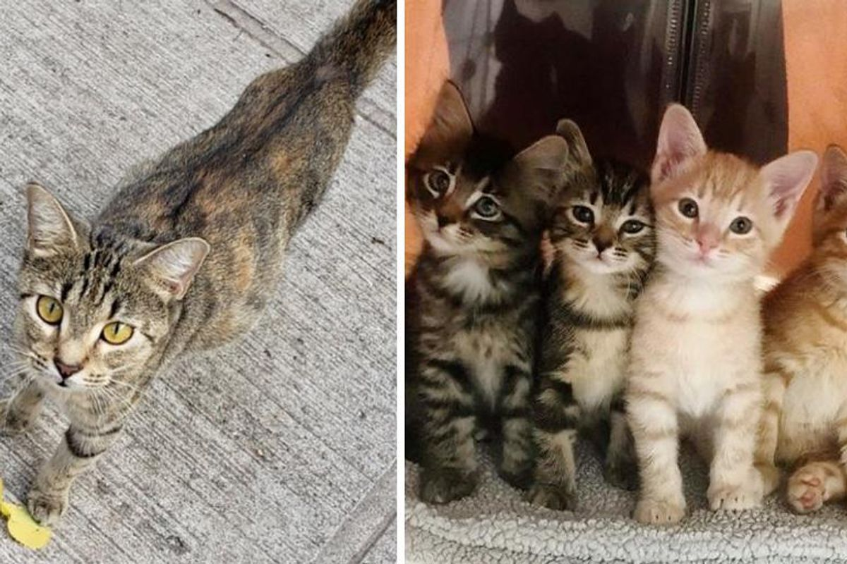 Cat Walked Up to Right Person for Help So Her Kittens Could Have Better Lives