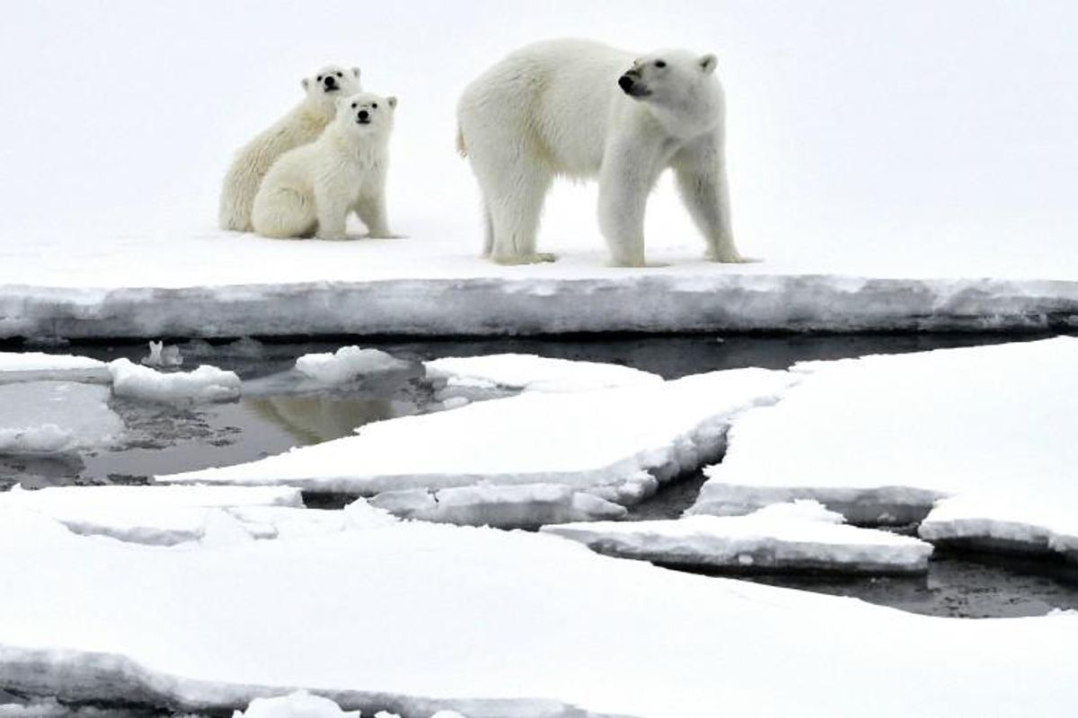 Court rejects Trump-approved Arctic drilling project in victory for polar bears and climate