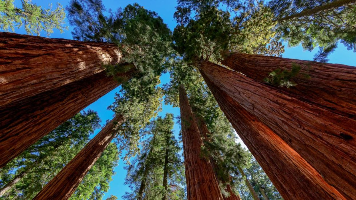 Why Curators Evacuated Sequoia and King's Canyon National Parks' Archives