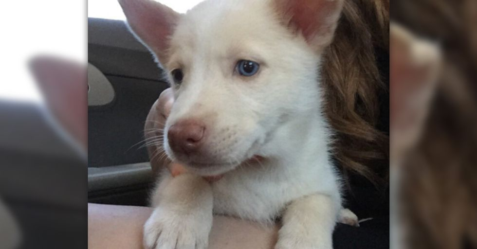15 Insane Things That Happened After Some Roommates Decided to Exchange Nude Photos for a Husky Puppy