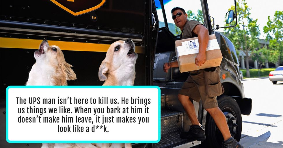 People Reveal the 11 Things They Would Say to Their Pets If They Could Speak the Same Language