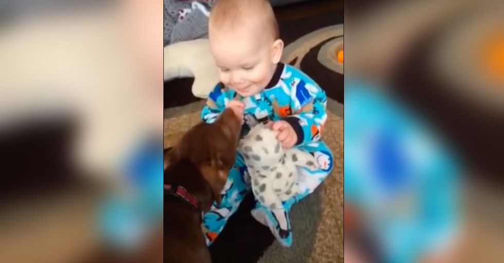 Baby and Puppy Show Us True Friendship