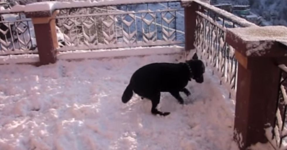 This Dog Has Never Seen Snow Before But He Knows It's VERY Exciting