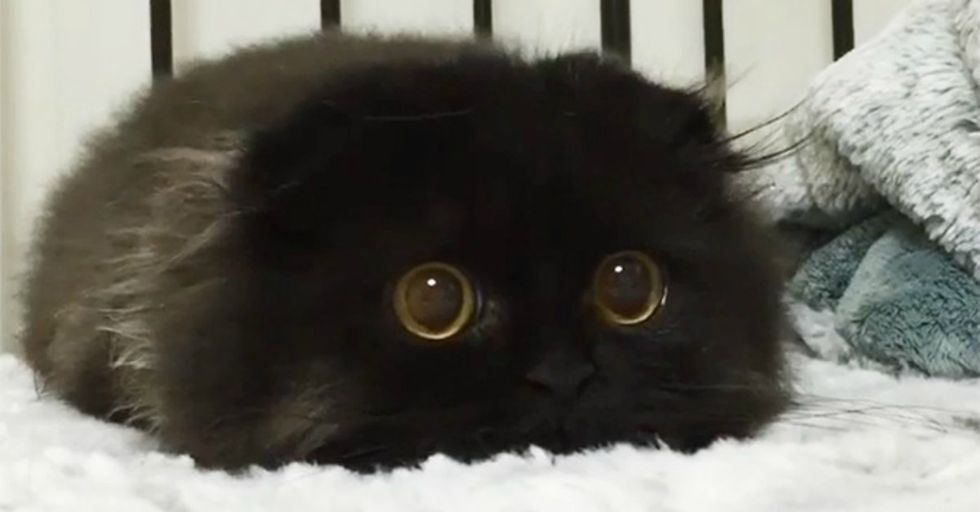 This Adorable Kitty Has The Biggest, Cutest Eyes We've Ever Seen