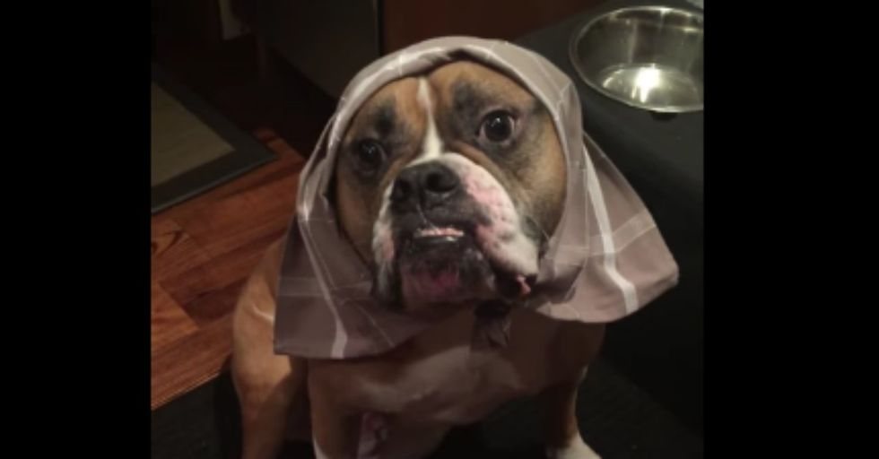 This Dog Sitter Updated the Pup's Owners With Hilarious Videos. And Now the DOG Needs a Vacation...