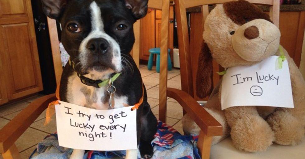 The 40 Funniest Times We've Shamed Our Dogs On Social Media