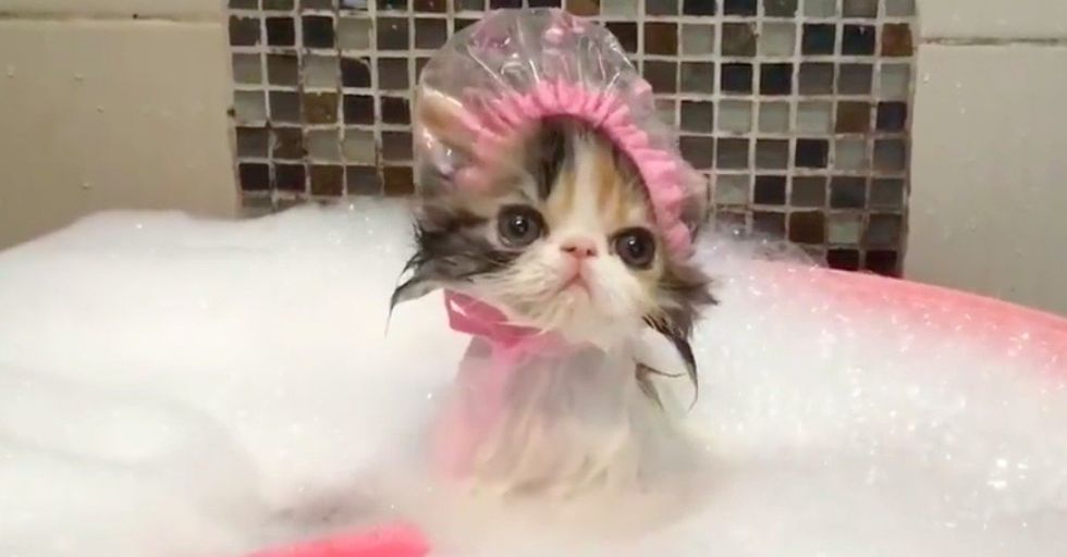 You Will Never See Anything as Cute as This Cat Wearing a Shower Cap, Taking a Bath