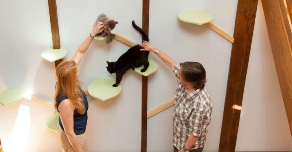 This Is How You 'Catify' a House For Seven Cats