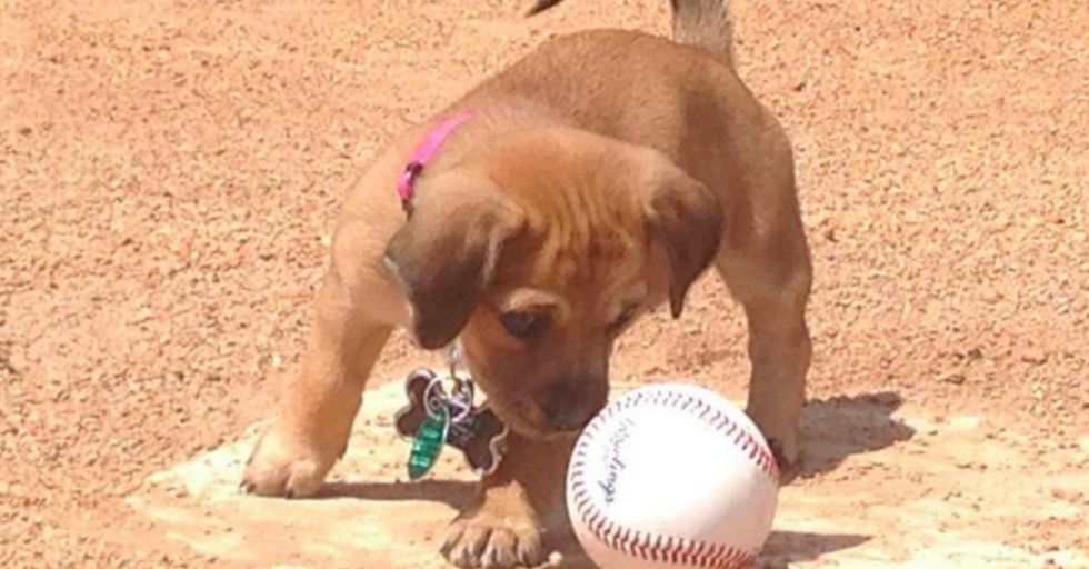 Abandoned Puppy Finds a New Family AND a Job at a Baseball Stadium