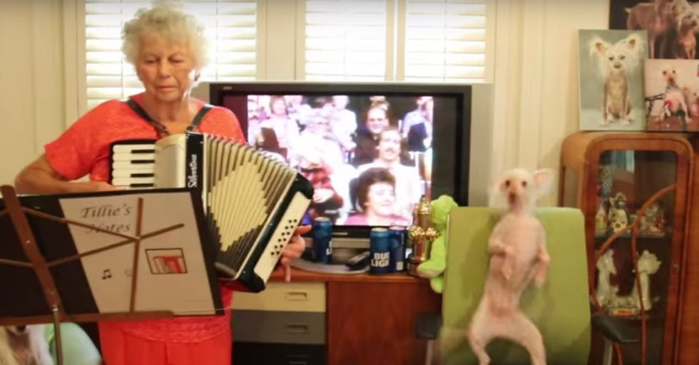It's Impossible Not To Smile at Nathan the Hairless Dog Dancing To Polka