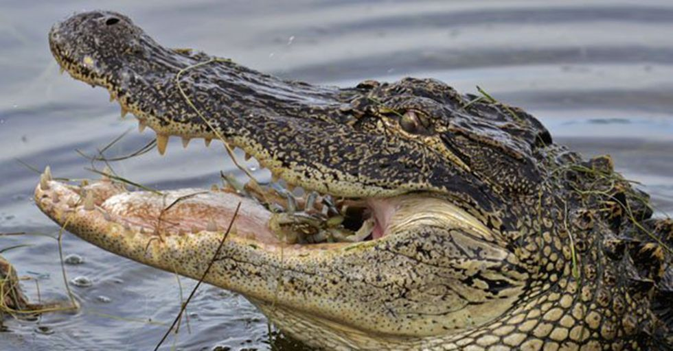 Ever Wonder What Animals Can Do the Most Damage With Their Mouths? We Rank the Strongest Bites!