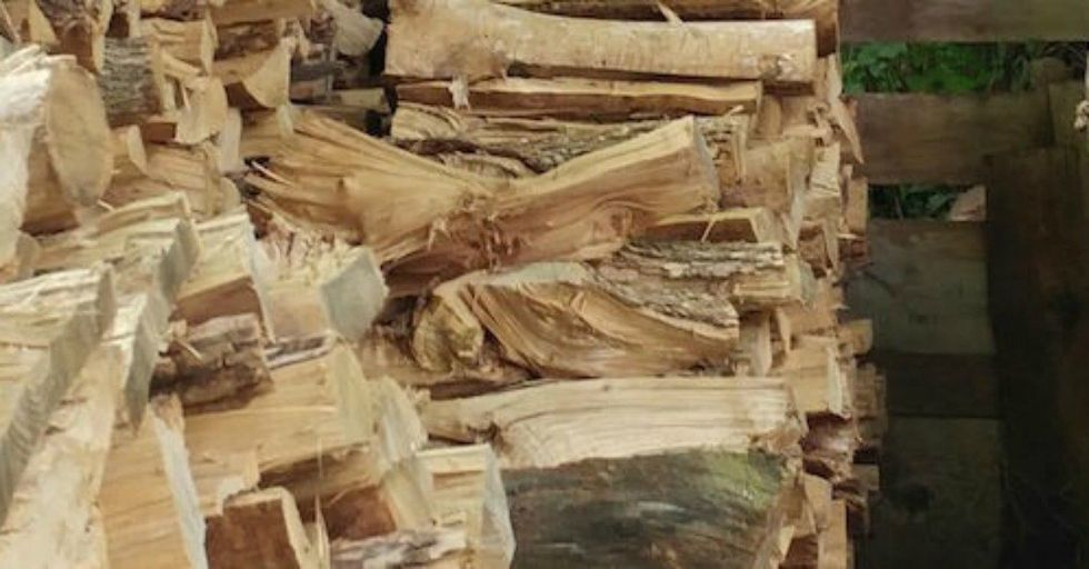 There's a Cat Hiding In This Woodpile…Can You Find Him?