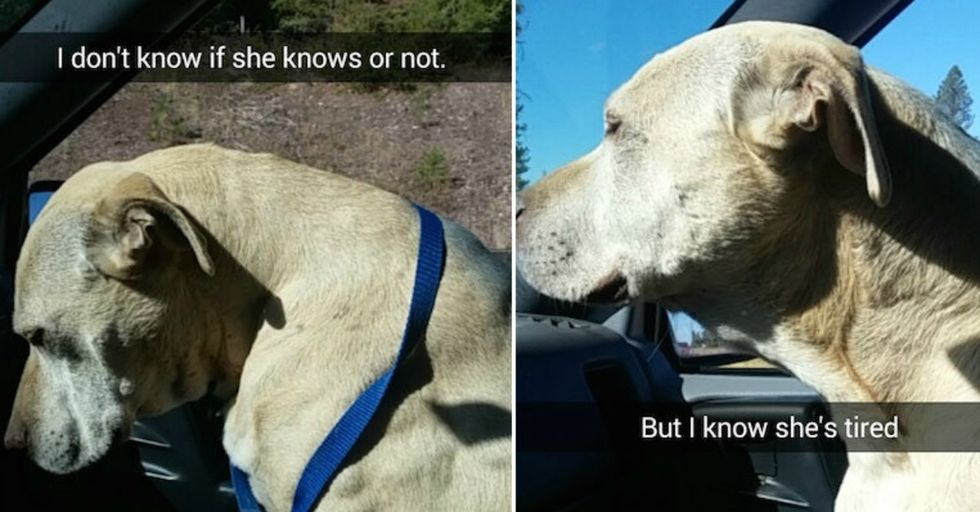 This Woman Snapchatted the Last Day With Her Dog and No, YOU'RE the One Crying
