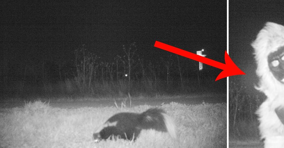 Police Set Up a Camera To Find a Mountain Lion and Found THIS Craziness Instead