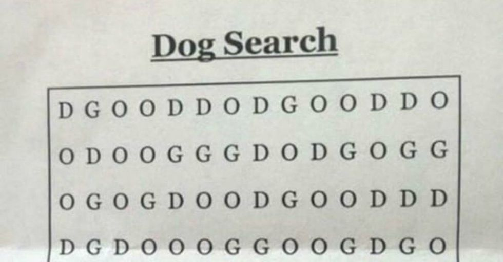 Can YOU Solve 'The World's Hardest Word Search' and Find the Dog?